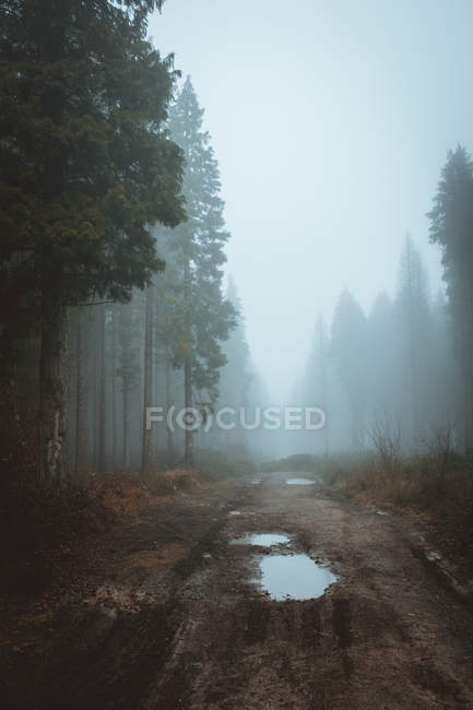 Rural road running away in tranquil foggy woods. — Stock Photo