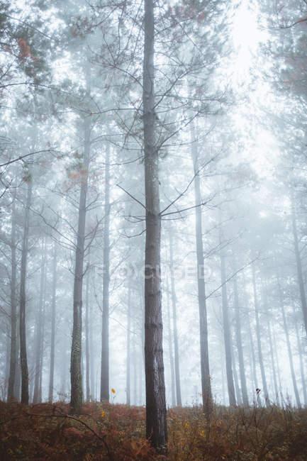 Paysage tranquille de bois automnaux brumeux — Photo de stock