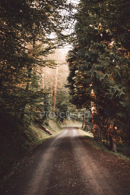 Rural road in idyllic green forest — Stock Photo