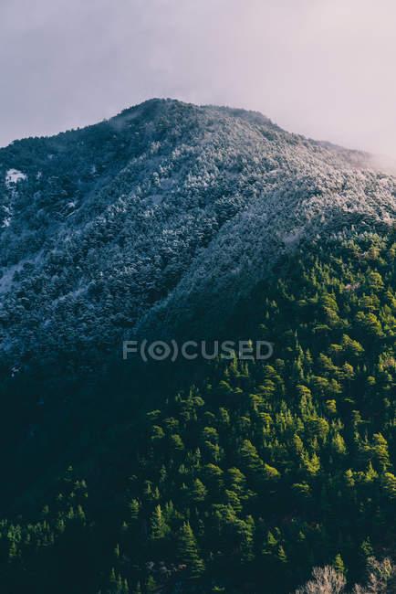 Vue panoramique sur la montagne enneigée avec la forêt dans la doux lumière du soleil — Photo de stock
