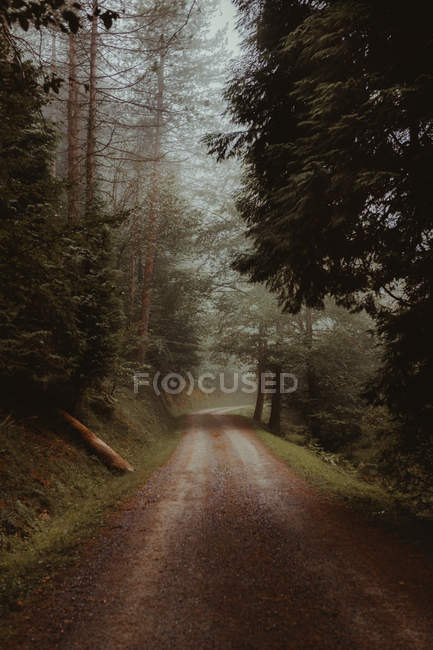 Perspective view to countryside road in green calm forest. — Stock Photo
