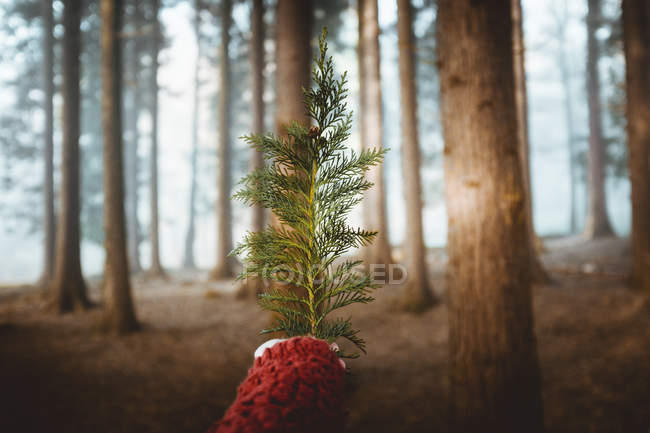 Crop hand in sweater showing small branch on background of tree trunks — Stock Photo