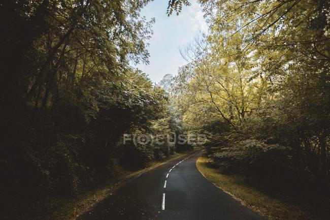 Vista di asfalto strada scappando in curva tra boschi rigogliosi. — Foto stock