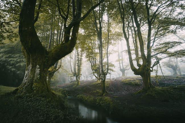 Grüne Wälder und kleine Fluss im Morgennebel — Stockfoto