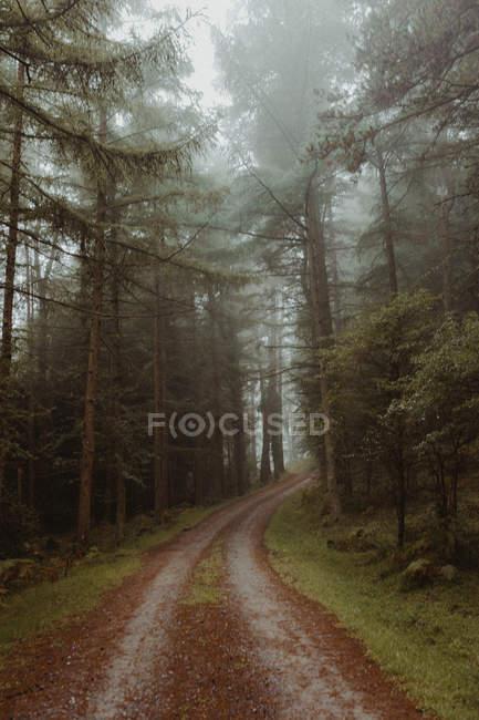 Дорога в Мистик туманные леса с вечнозелеными деревьями. — стоковое фото