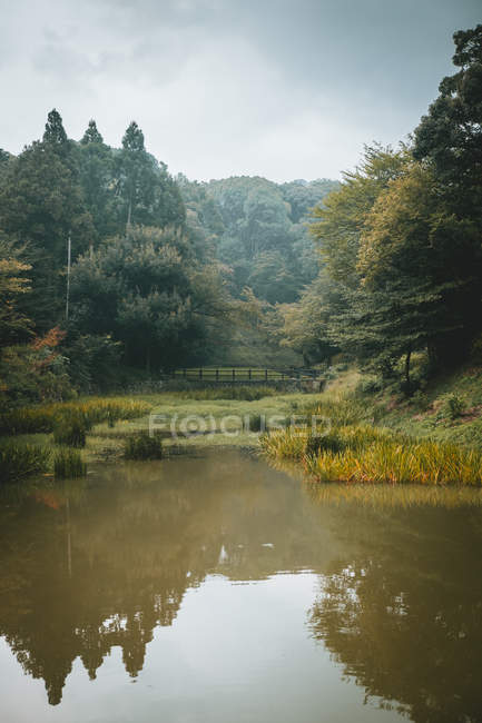 Pond and bridge in beautiful green forest. — Stock Photo