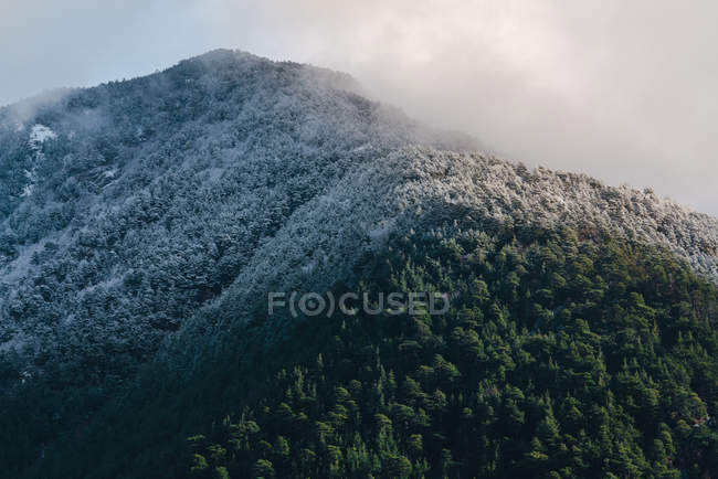 Vert de la forêt sur une pente de montagne enneigée au ciel brumeux — Photo de stock