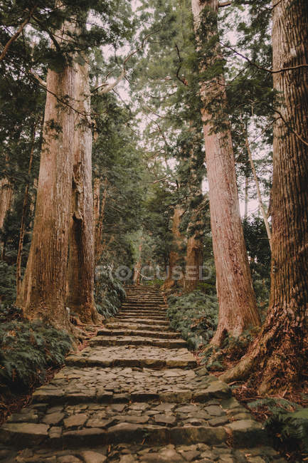 Path with steps in green forest. — Stock Photo