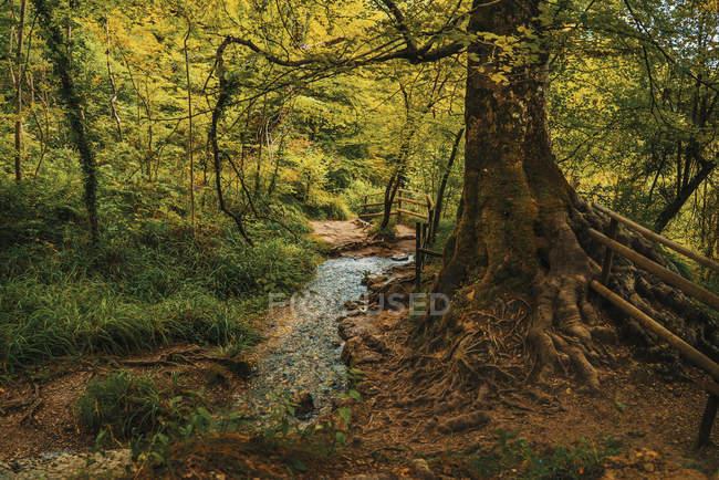 Mostra al grande albero verde che cresce nella foresta di autunno scenico. — Foto stock