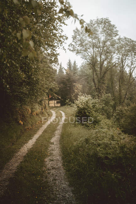 Rural road running to gates in green forest — Stock Photo