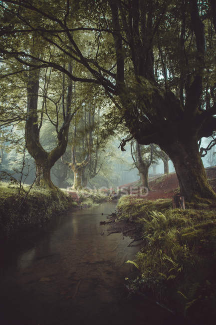 Small river flowing in idyllic misty forest. — Stock Photo