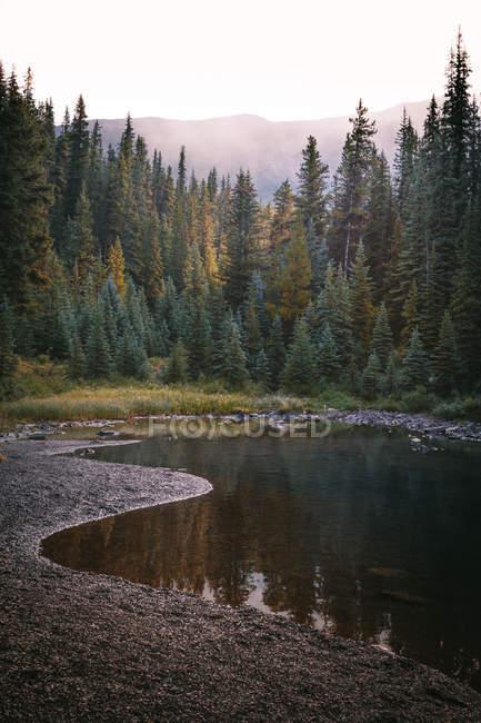 Pintoresca vista a bosques verdes y pequeño estanque - foto de stock