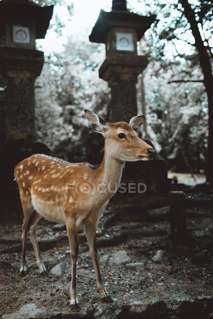 Pé pequeno veado na floresta — Fotografia de Stock