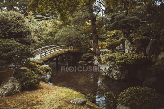 Piccolo ponte di legno sul fiume nella foresta verde . — Foto stock