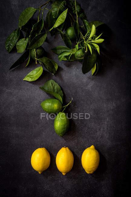 Arreglo de limón maduro y limones en la mesa oscura - foto de stock