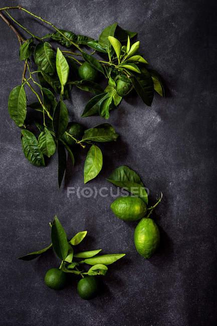 Bodegón de limones frescos en ramas de mesa oscura. - foto de stock