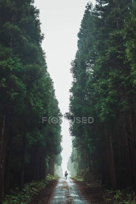 Distant view of woman walking on road amid tall woods on foggy day — Stock Photo