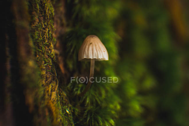 Close up view of small mushroom growing on tree trunk. — Stock Photo