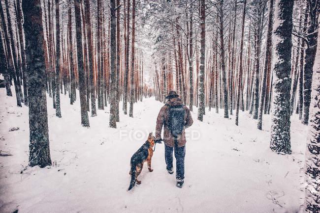 Вид сзади на человека, гуляющего с собакой в зимнем лесу . — стоковое фото