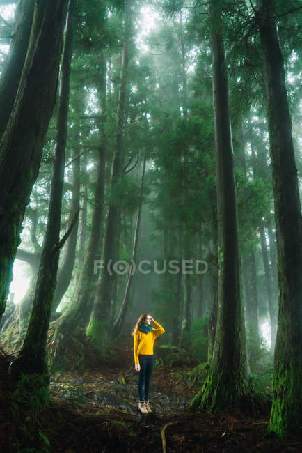 Woman in yellow sweater looking away in misty forest — Stock Photo