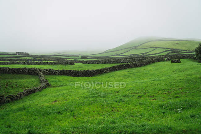 Paesaggio di campo verde e recinzioni in pietra nella giornata nebbiosa . — Foto stock