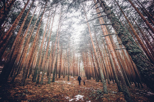 Вид сзади на человека, гуляющего с собакой в лесу . — стоковое фото