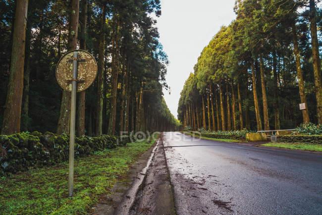 Segnale stradale all'asfalto in sempreverde foresta piena di sole. — Foto stock