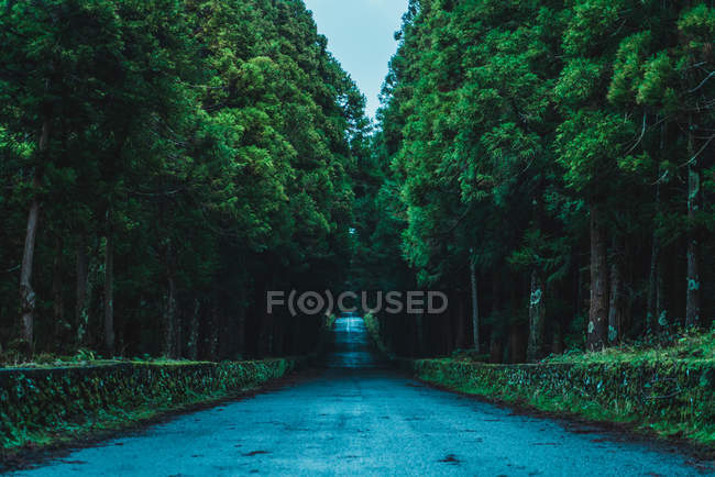 Perspective view to asphalt road in green forest at dusk — Stock Photo