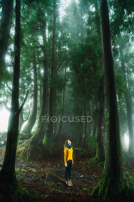 Woman in yellow sweater looking up in misty forest — Stock Photo