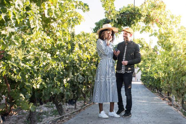 Cheerful interracial couple tasting grape at vineyard alley — Stock Photo