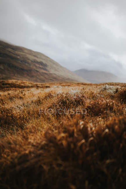 Landscape of dry meadow on background of misty hills — Stock Photo