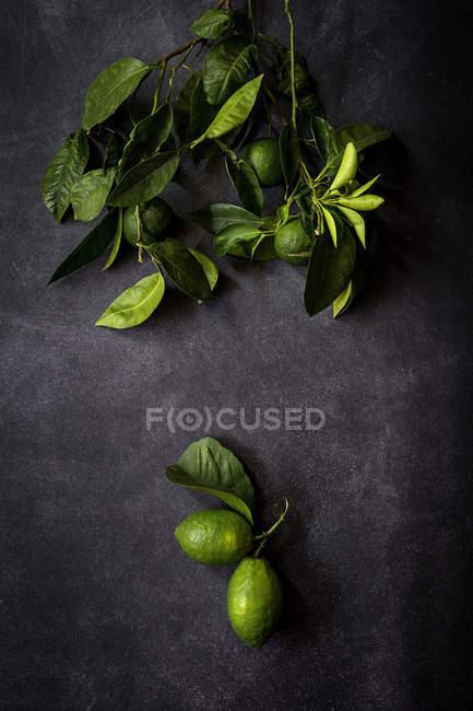 Stillleben mit frischen Zitronen und Blätter auf dunklen Tisch — Stockfoto