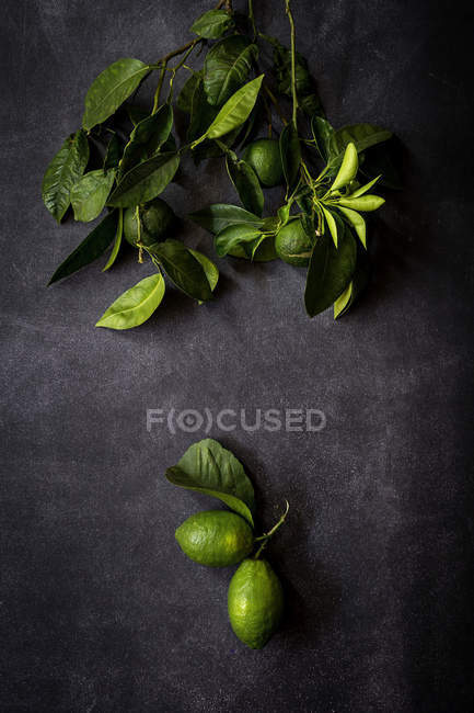 Still life of fresh lemons and leaves on dark table — Stock Photo