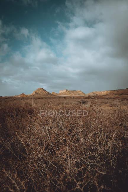 Piante secche sul campo sotto cloudscape drammatico — Foto stock