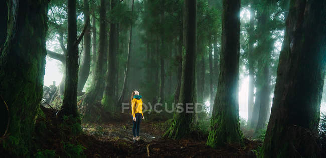 Panoramic view with young woman standing in misty forest and looking up on trees. — Stock Photo