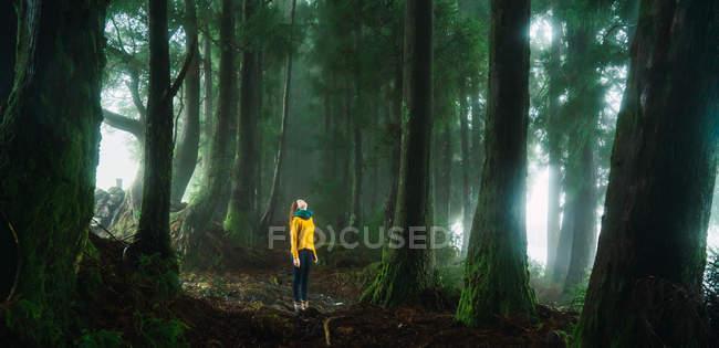 Панорамний вид з молодою жінкою, стоячи в туманні лісу і дивлячись на деревах. — стокове фото
