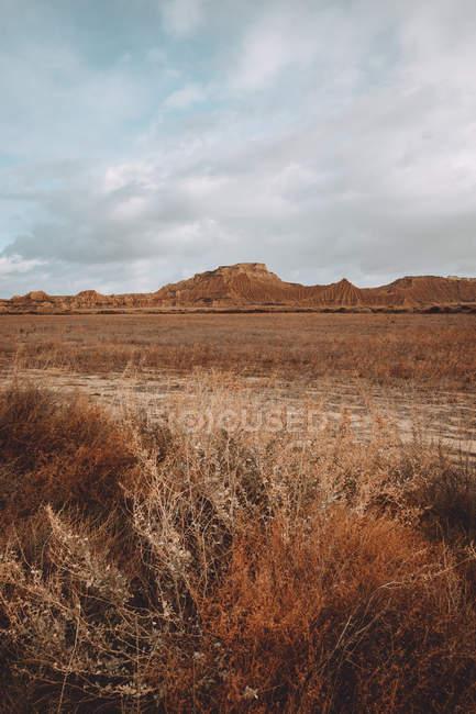Vista panorâmica para secar a grama em campo nas colinas de areias em dia nublado. — Fotografia de Stock