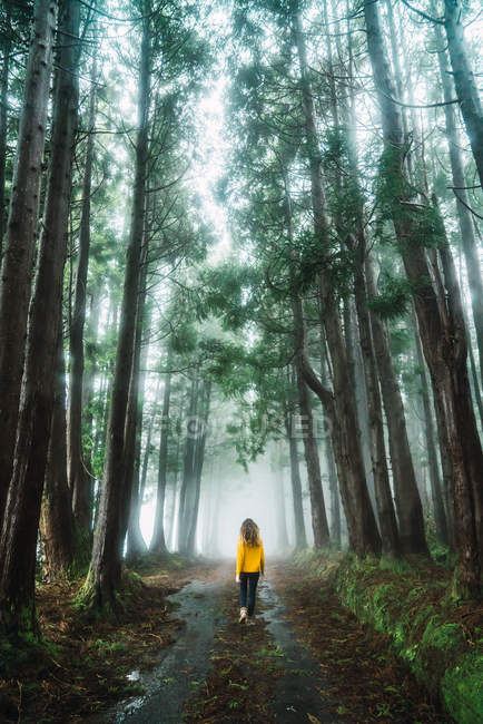Back view of woman walking in misty forest — Stock Photo