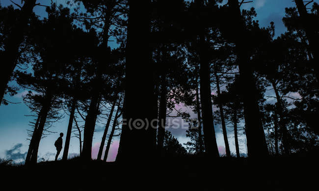 Silhouette of person standing in dark forest in the evening. — Stock Photo