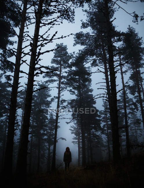 Creepy silhouette standing in dark foggy forest. — Stock Photo