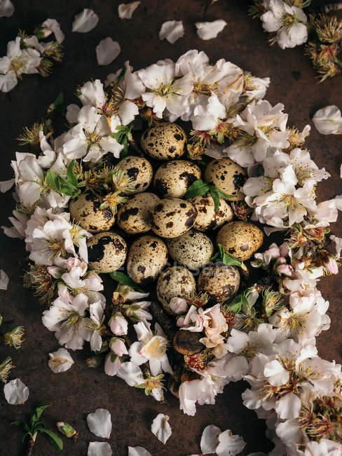 Прямо над видом на перепелиное яйцо в белых цветах — стоковое фото