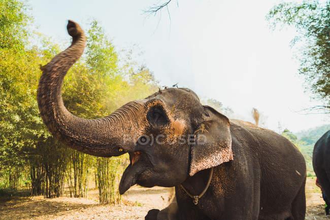 Elefante de pie en un pequeño río en un día soleado . - foto de stock