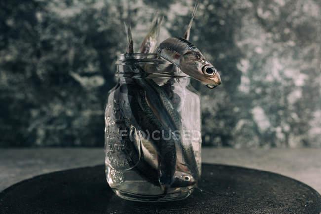 Nature morte d'anchois frais dans un bocal à l'eau — Photo de stock