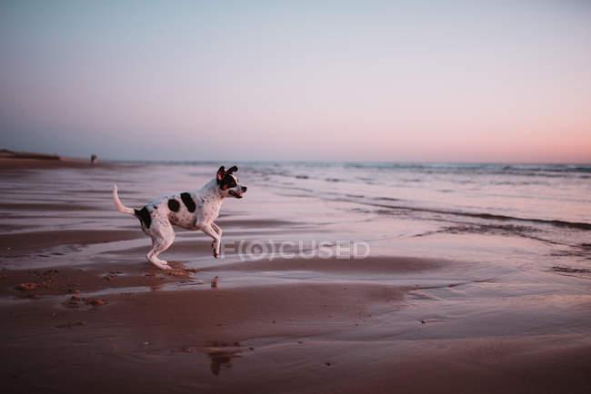 Cão pequeno bonito na praia de areia em dia sem nuvens . — Fotografia de Stock