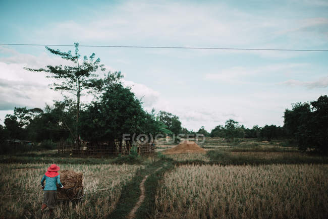 Rear view of asian peasant with cart at field — Stock Photo