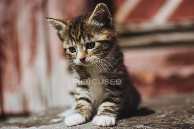 Adorable gatito sentado en el suelo . - foto de stock