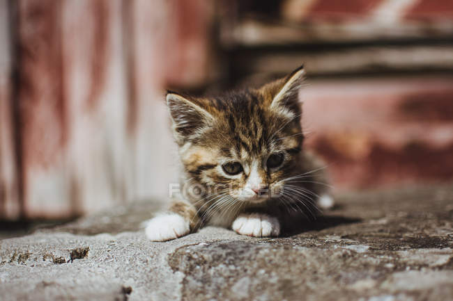 Cute little tabby kitten on ground — Stock Photo