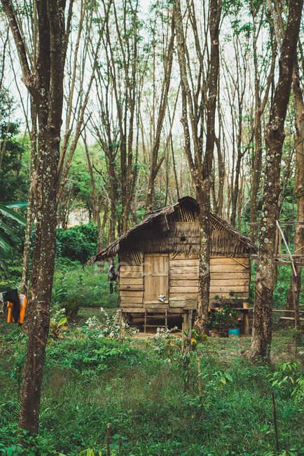 Небольшой деревянный дом с соломенной крышей в лесу — стоковое фото