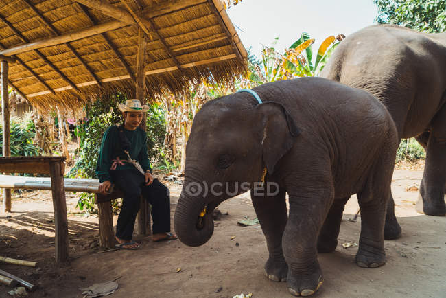 CHIANG RAI, THAILAND- FEBRUARY 9, 2018: Man sitting on bench in hut and looking at big elephant with child. — Stock Photo