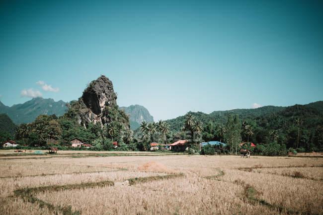 Trocknen Sie Feld und tropischen Wald auf Hügeln in sonnigen Tag — Stockfoto